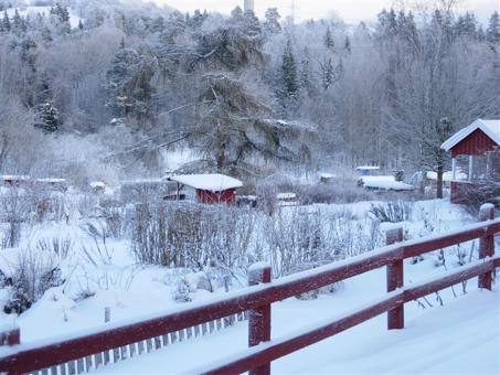 koloni-vinter